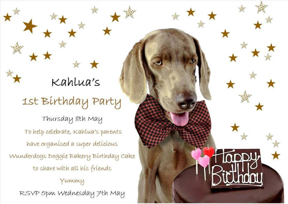 Happy Birthday Kahlua !